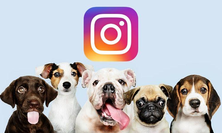 Top 10 Dogfluencers: los perros más seguidos de Instagram captan la atención de las marcas (2021)